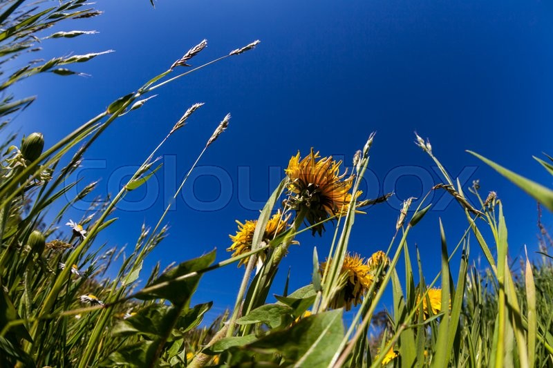 Stock Bild von 'blüte, aster, background'