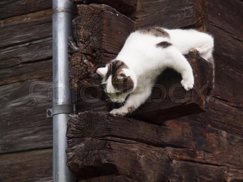 Stock Bild von 'The house cat climbing'