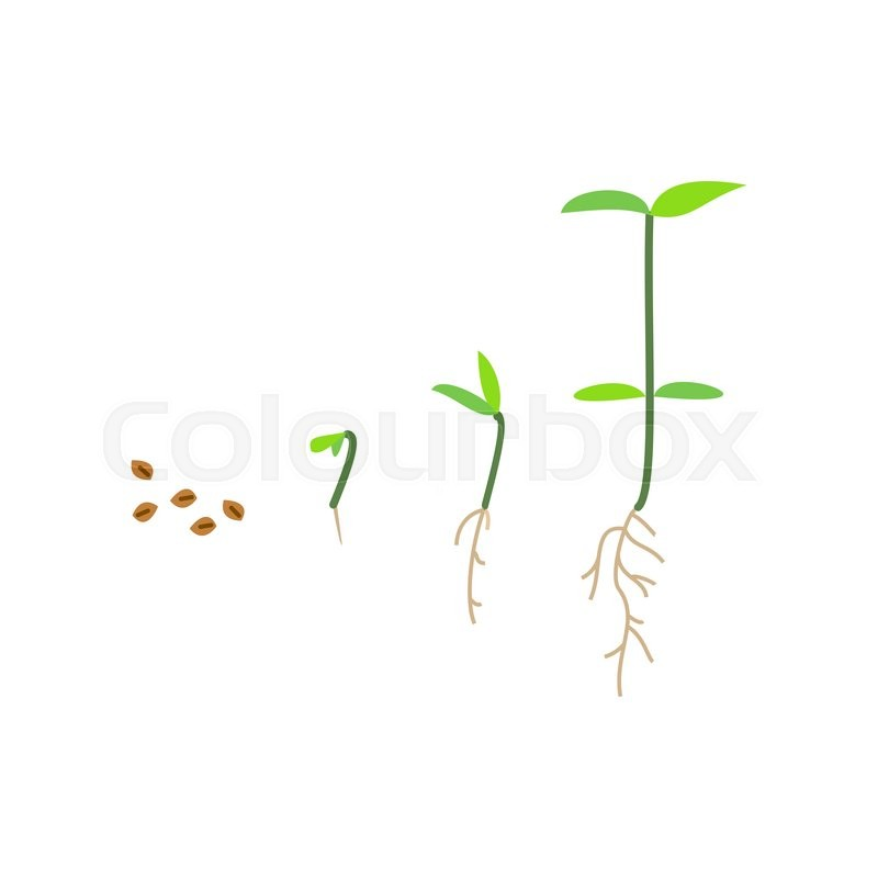 Line Sprout And Plant Growing Linear Nature Leaf Grow Tree Garden And Flower Organic