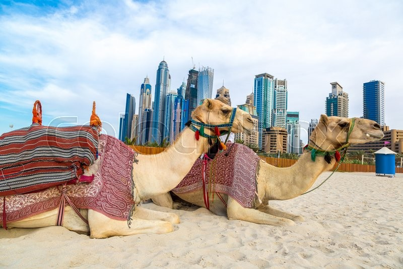 Camel in front of dubai marina in a summer day united arab emirates camel in front of dubai marina in a summer day united arab emirates stock photo colourbox altavistaventures Choice Image