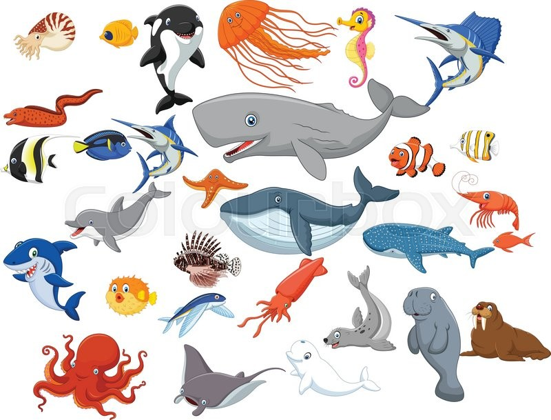 Vector illustration of Cartoon sea animals isolated on white background | Stock Vector | Colourbox