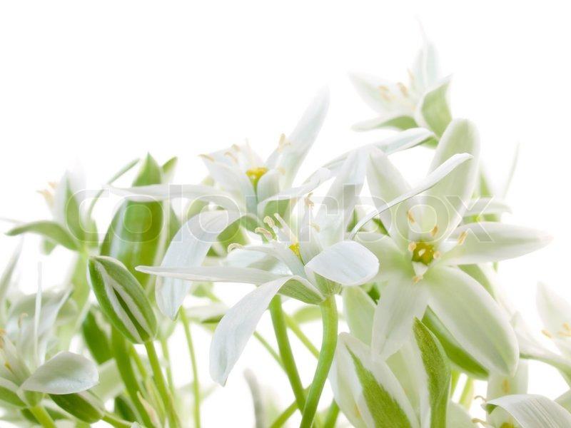Weiße Blumen auf weißem Hintergrund. | Stockfoto | Colourbox