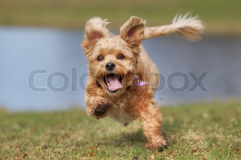 A mixed breed dog without leash outdoors in the nature on a sunny day, stock photo