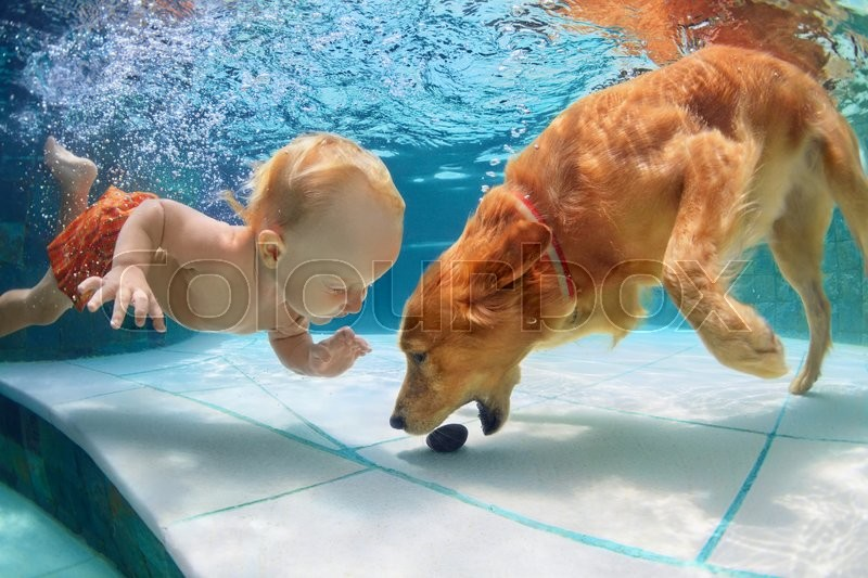 Funny little child play with fun and train golden labrador retriever puppy in swimming pool, jump and dive deep down underwater. Active water games with family pets, popular dog breeds like companion, stock photo