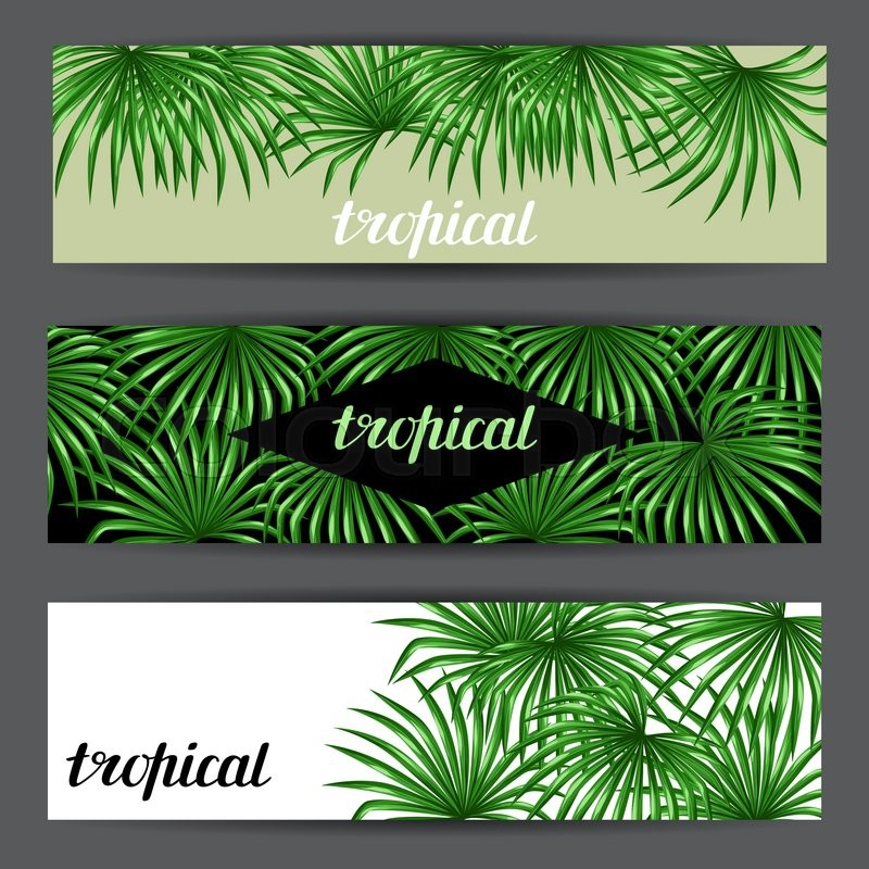 Banners card with palms leaves decorative image tropical leaf of banners card with palms leaves decorative image tropical leaf of palm tree livistona rotundifolia image for holiday invitations greeting cards posters m4hsunfo