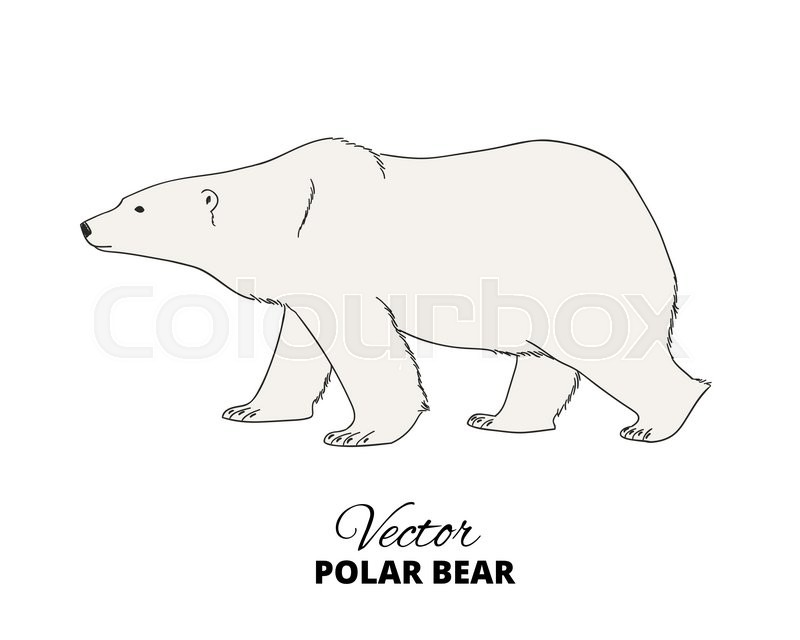 Polar Bear Hand Drawn Illustration Stock Vector