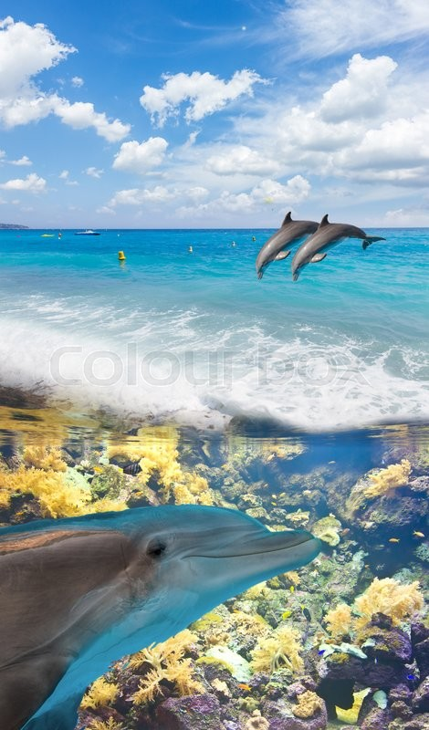 Stock image of 'seascape with turquoise sea, underwater and jumping dolphins'