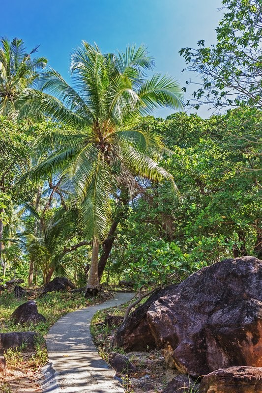 Stock image of 'Footpath in palm grove in thailand'