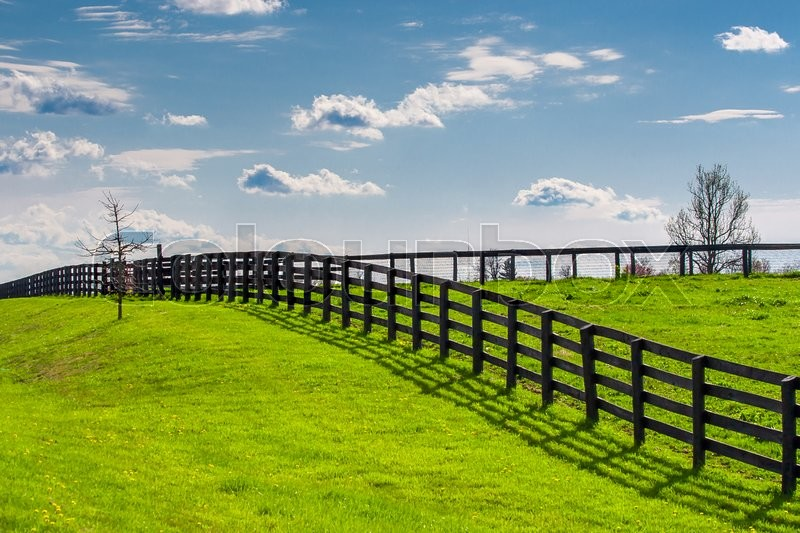 Green pastures of horse farms. Countryside spring landscape, stock photo