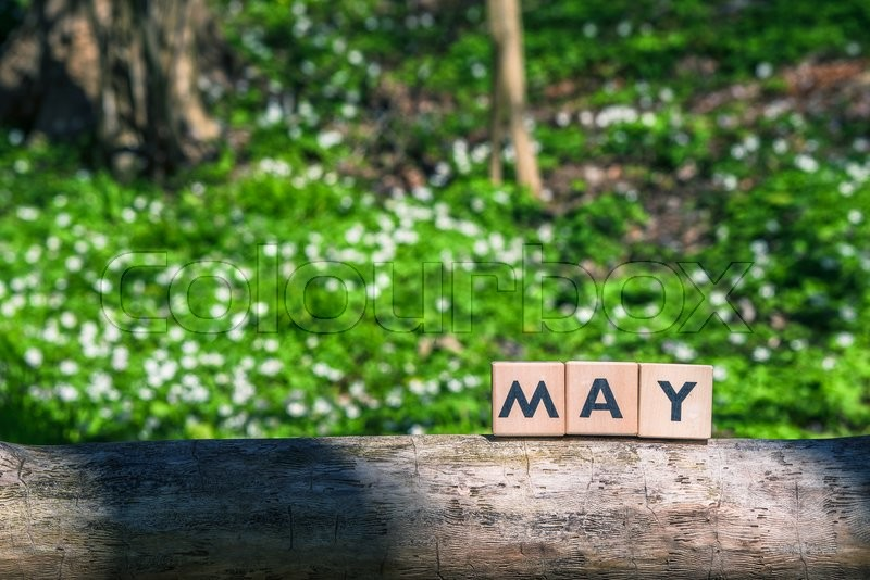 Stock image of 'May spring sign in a green garden in a tree'