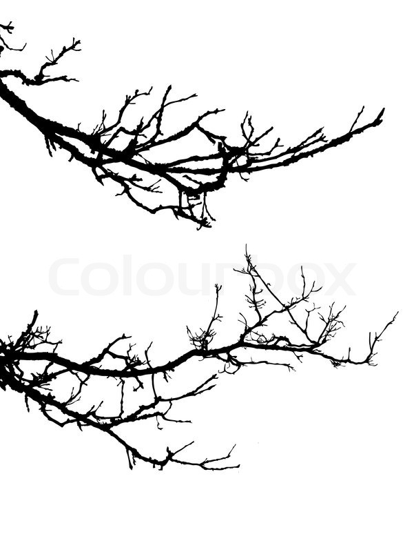 vector silhouette of the branch tree on white background stock rh colourbox com tree branch vector with leaves tree branch vector black
