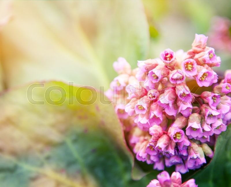 Stock image of 'Beautiful natural spring background. Pink wild hyacinth'