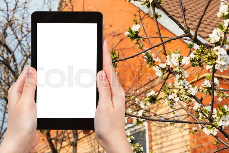 Stock image of 'season concept - farmer photographs flowering cherry tree on country house backyard on tablet pc with cut out screen with blank place for advertising'