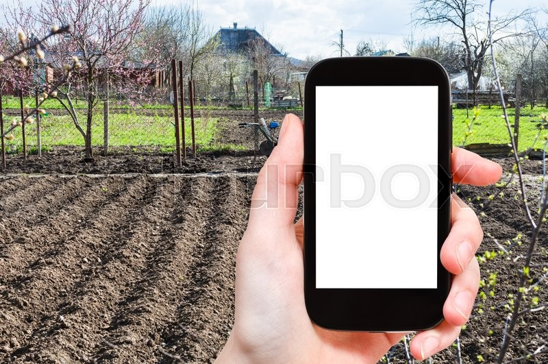 Stock image of 'season concept - farmer photographs plowed vegetable garden on smartphone with cut out screen with blank place for advertising'