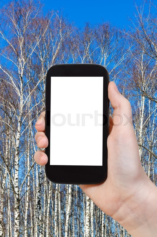 Stock image of 'season concept - tourist photographs bare birch trunks and blue sky in sunny spring day on smartphone with cut out screen with blank place for advertising'