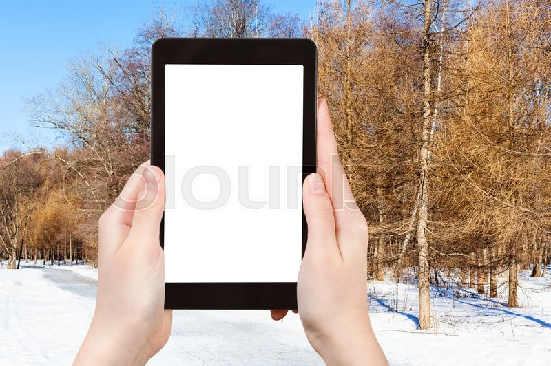 Stock image of 'season concept - tourist photographs frozen path in larch forest in sunny winter day on tablet pc with cut out screen with blank place for advertising'