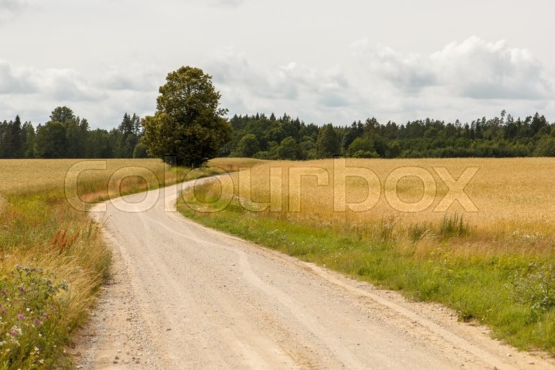 Stock image of 'A gravel countryside road going trough a field'