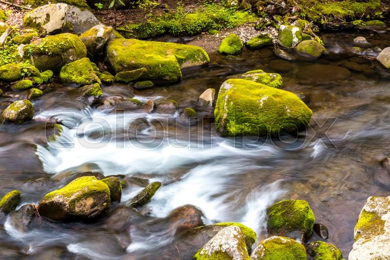 Stock image of 'Forest creek. Water cascades over moss covered rocks in Great Smoky Mountains National Park.'