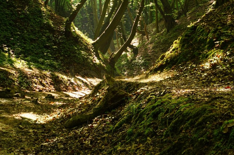 Ravine In The Forest Lit Sunlight Stock Photo Colourbox