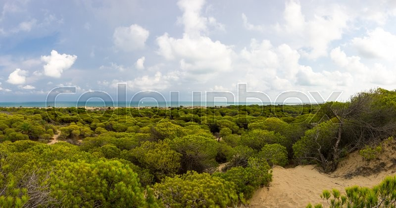 Stock image of 'Dunes de La Marina on the coast of Mediterranean sea, Costa Blanca, Spain'