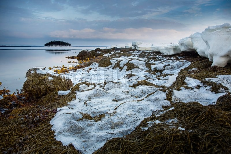 Stock image of 'Seaweed shore of the White Sea during the sunset. Northern Karelia. Russia'