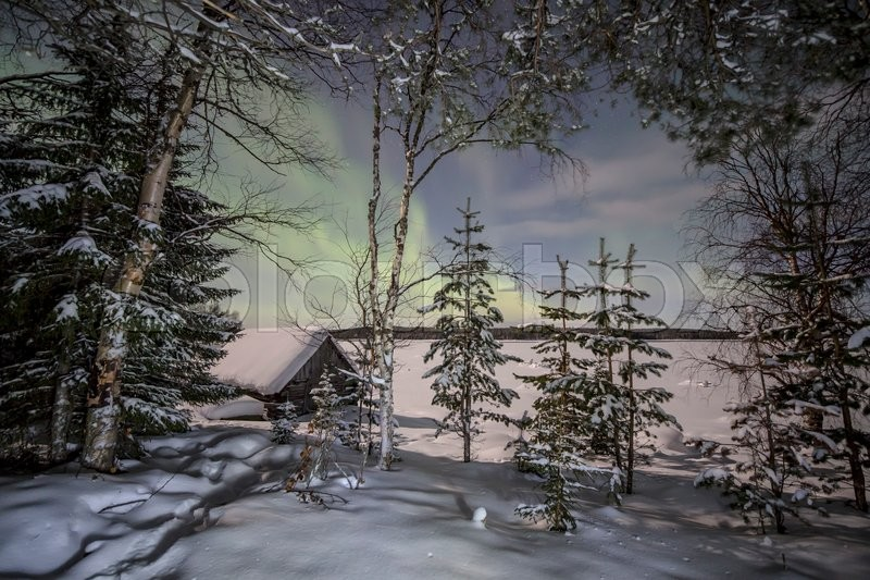 Stock image of 'Winter forest under the lights of Aurora borealis. Northern Karelia. Russia.'