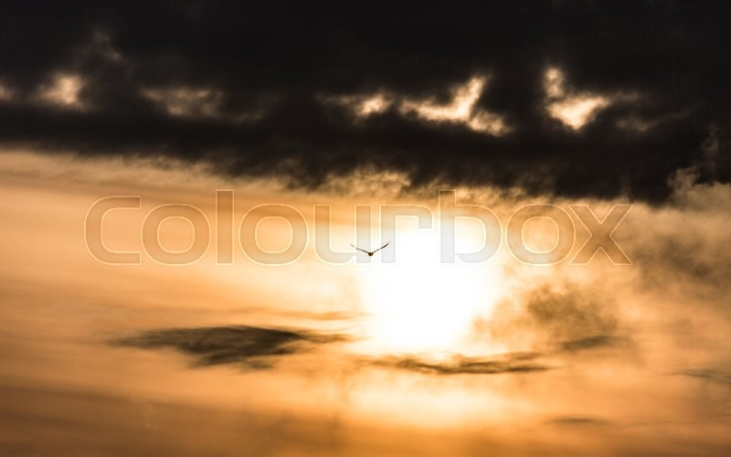Stock image of 'Eagle in the storm sky.'