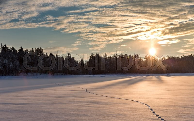 Stock image of 'Sunset meadow in winter forest. White Sea shore. Northern Karelia. Russia'