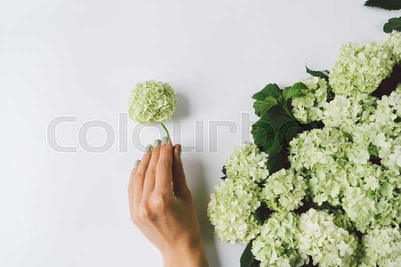 Stock image of 'Female hand making decoration of green flowers on a white background, top view'