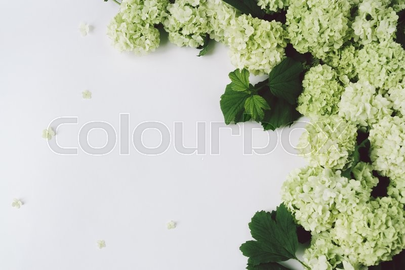 Stock image of 'Decoration from green flowers and leaves on a white background, top view, space for text'