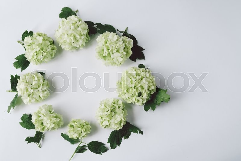 Stock image of 'Green flowers with leaves in the form of a circle lie on a white background, top view'