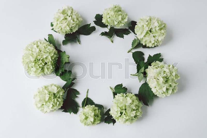 Stock image of 'Green flowers in the form of a circle lie on a white background, top view'
