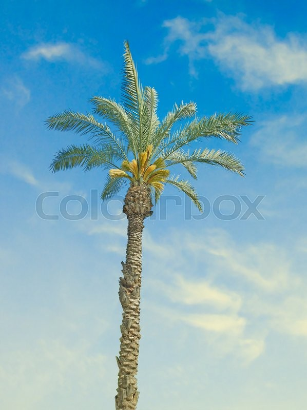 Stock image of 'Close up of palm                        '