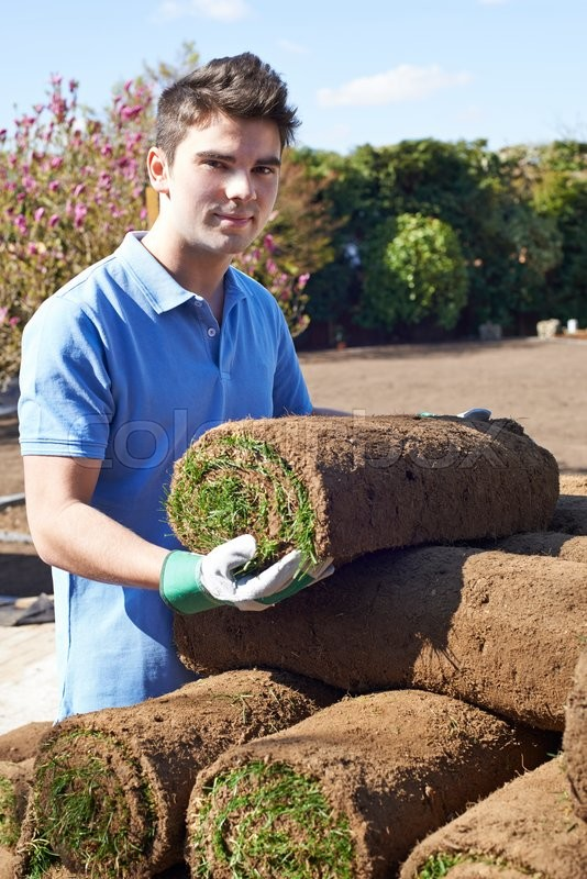 Stock image of 'Landscape Gardener Laying Turf For New Lawn'