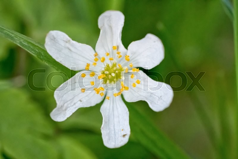 Stock image of 'Nice white flower with blurred green background'