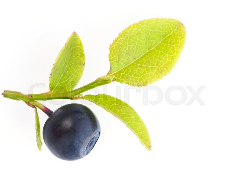 Stock image of 'Blueberry with leafs'