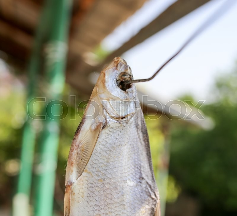Stock image of 'Sun-dried salted fish in the air'