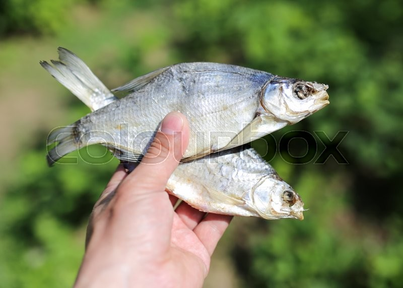 Stock image of 'Dried fish in hand on nature'