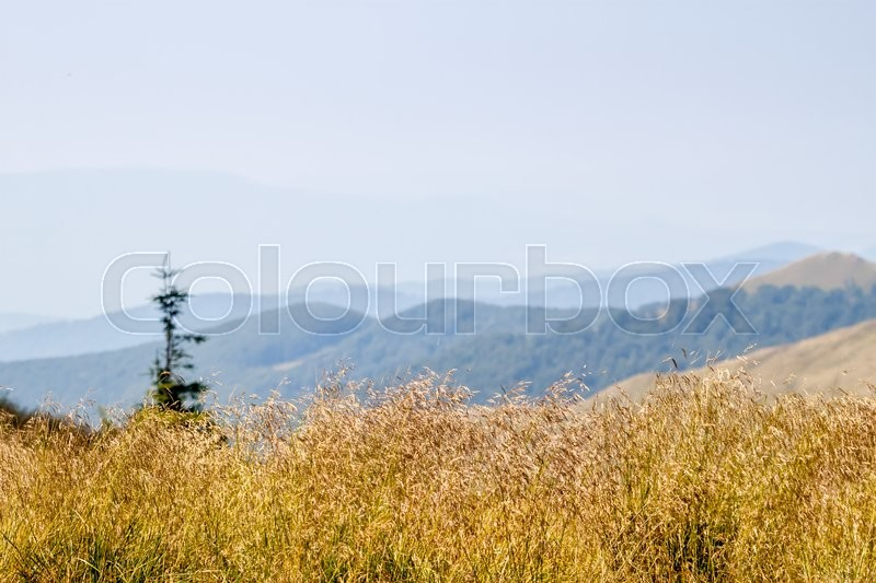 Stock image of 'summer landscape in the Ukrainian Carpathians can use as background'