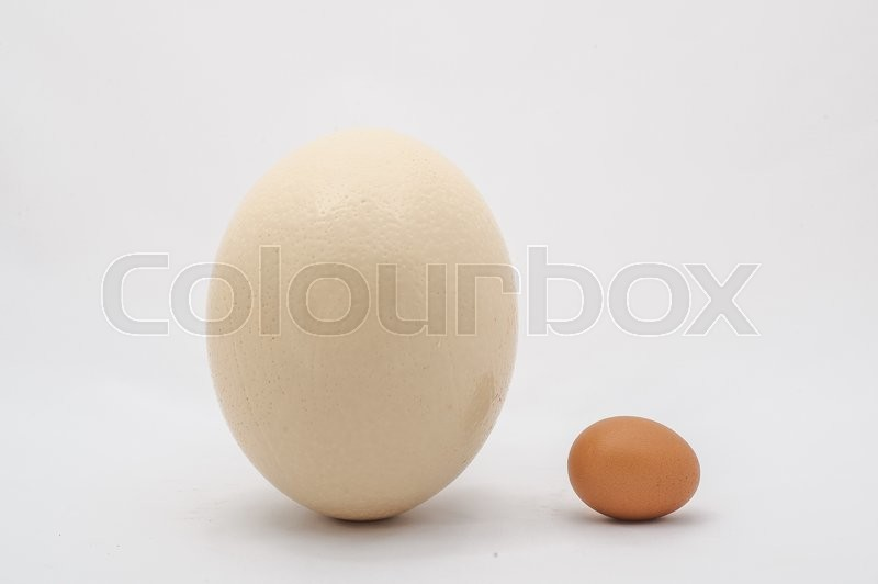 Stock image of 'Ostrich and chicken egg on white'
