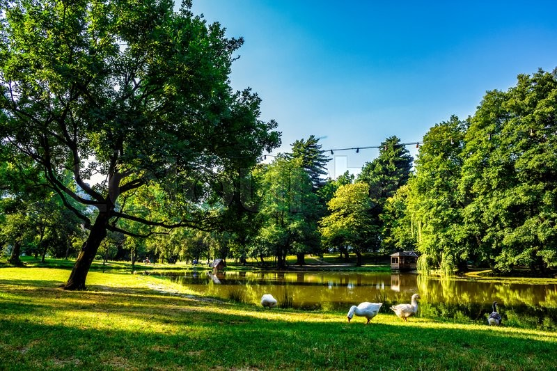 Stock image of 'three goose near the pond with gazebo in park at summer morning'