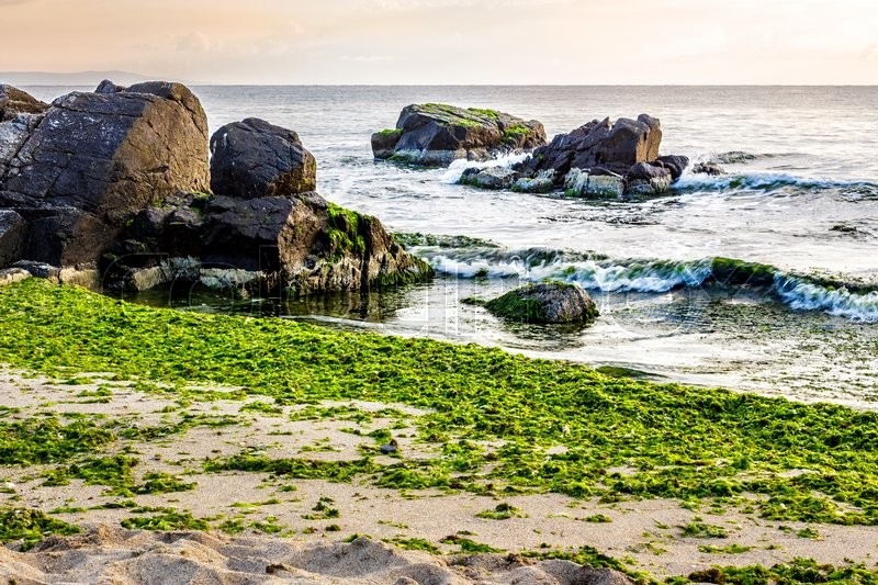 Stock image of 'calm sea with some wave attacks the sandy beach with boulders and seaweed and break on them in early morning'