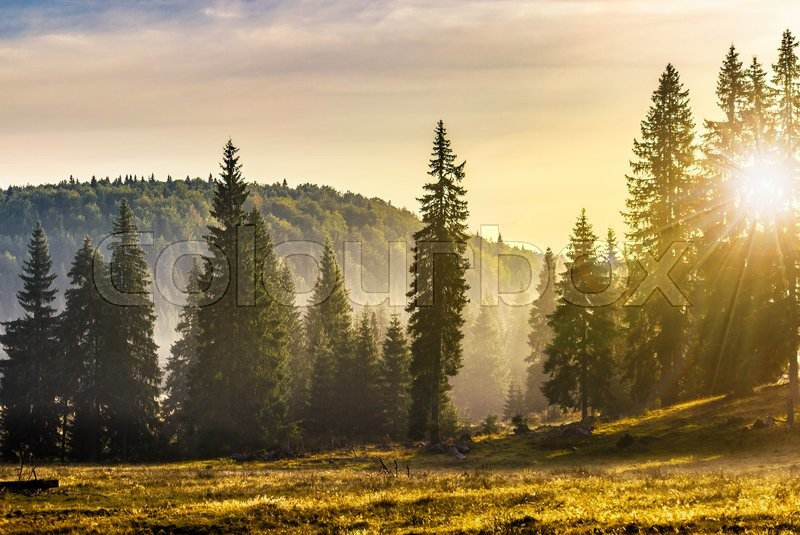 Stock image of 'cold morning fog with hot sunrise in conifer forest in  mountains of Romania'