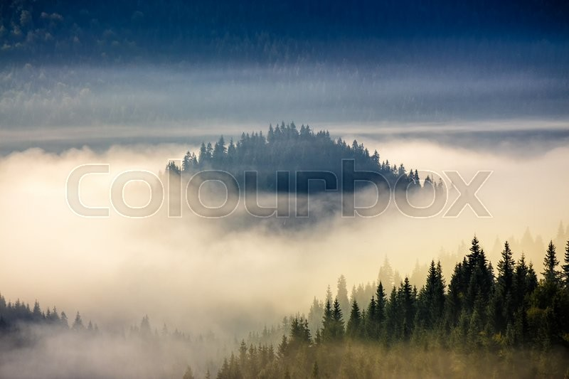 Stock image of 'hillside with coniferous forest among the fog on a meadow in mountains of Romania in morning light'