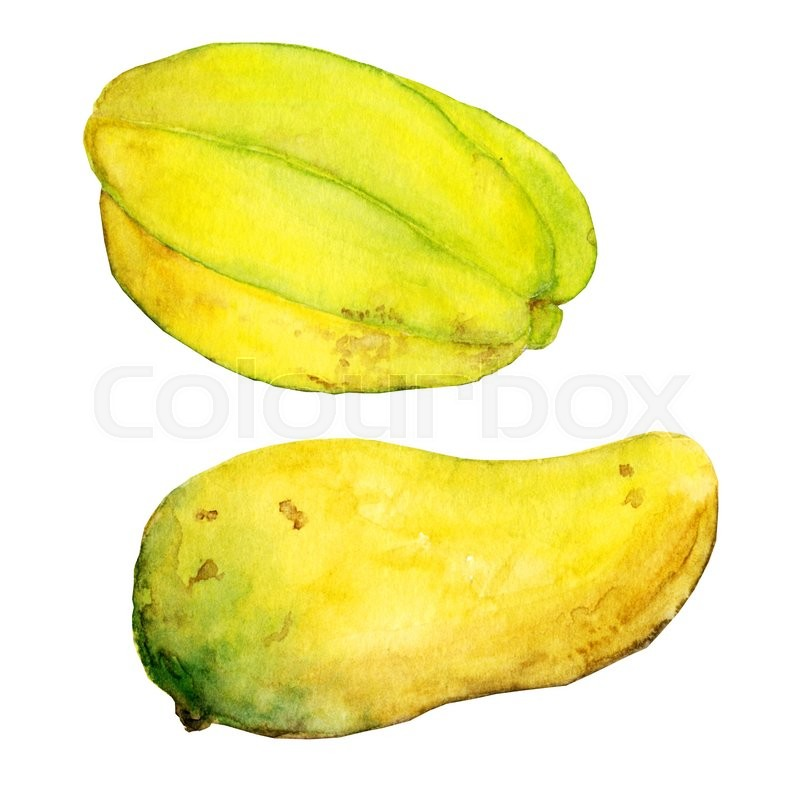 Stock image of 'Watercolor exotic fruits mango and carambola. Isolated painting on white background. Eco food illustration'