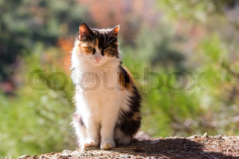 Stock image of 'Greece cat'