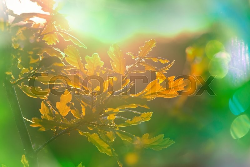 Stock image of 'Summer background with tree leaves'