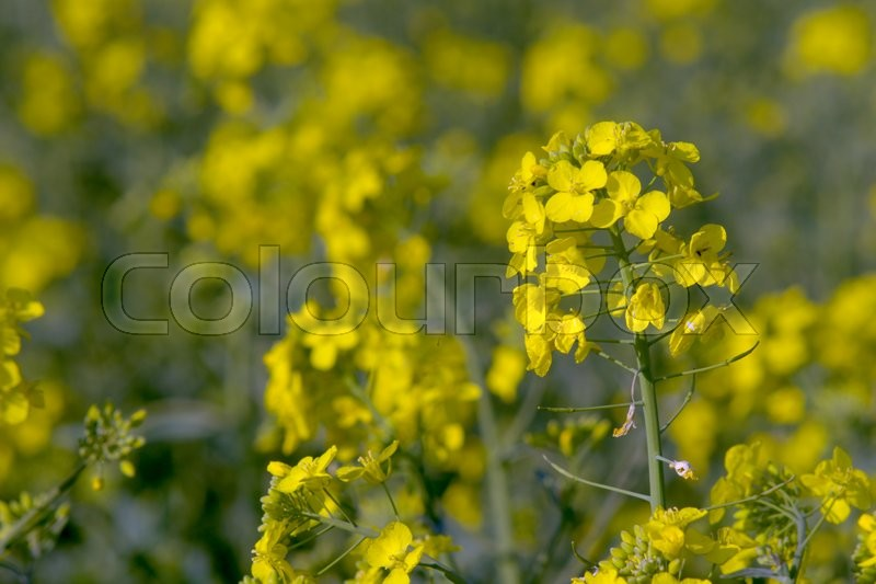 Stock image of 'flat, flower, flowers'