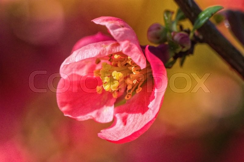 Stock image of 'Macro of pink flower with nice blurred background'