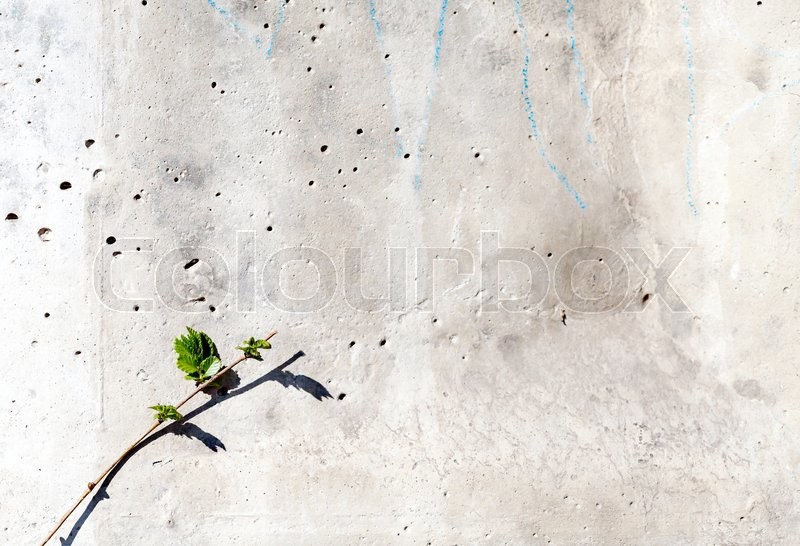 Stock image of 'Texture concrete wall and plant for the background. Little green tree with blurred background of a concrete wall. Copy space. Suitable for design'